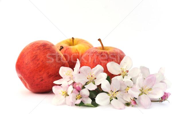 Apples and apple-tree blossoms Stock photo © brozova
