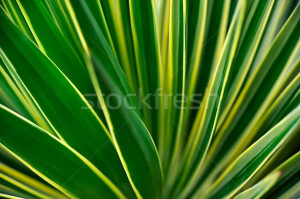 Abstract natuur blad woestijn groene Stockfoto © brozova