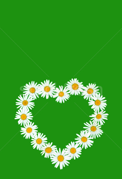 Daisy in love shape over green background Stock photo © brozova