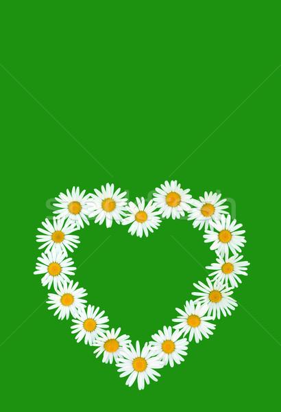 Papatya sevmek biçim yeşil çiçek doğa Stok fotoğraf © brozova