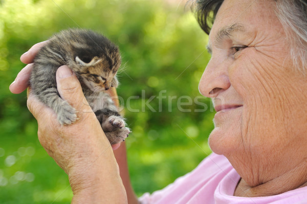 Kıdemli kadın küçük kedi yavrusu el Stok fotoğraf © brozova