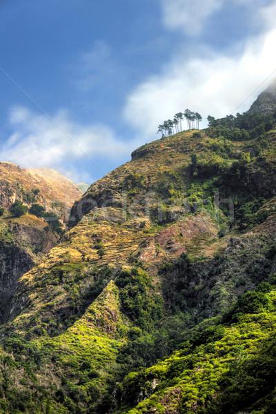 Back mountains of Madeira island, view from Ribeira da Serra  Stock photo © brozova