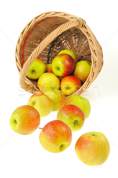 Fresh apples spilling out of basket - isolated on white background. Clipping path included. Stock photo © brozova