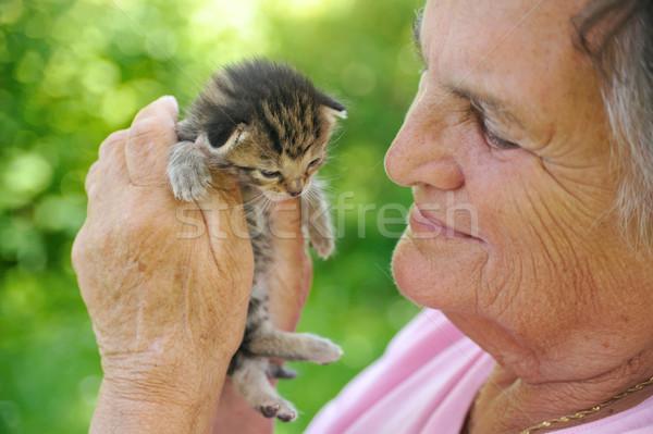 Foto stock: Senior · mulher · pequeno · gatinho · mão