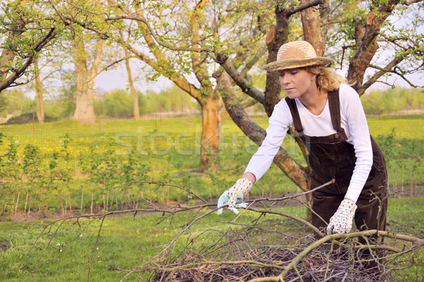 Young woman cleaning tree limbs Stock photo © brozova