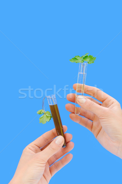 Clean and dirty water samples with fresh and wilted leaves Stock photo © brozova