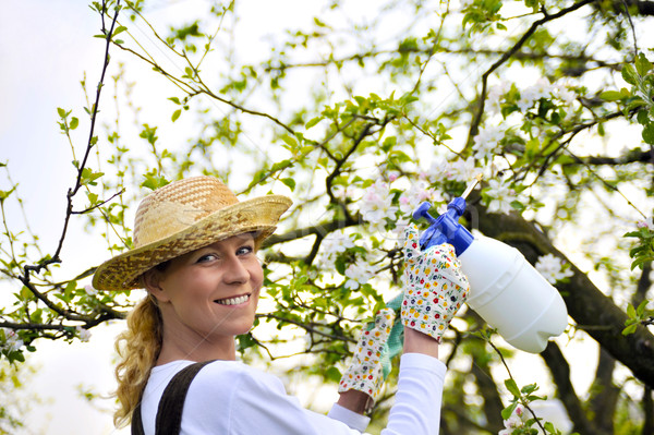 Young woman spraying apple tree Stock photo © brozova