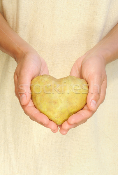 Hands of young woman holding potato in heart shape Stock photo © brozova