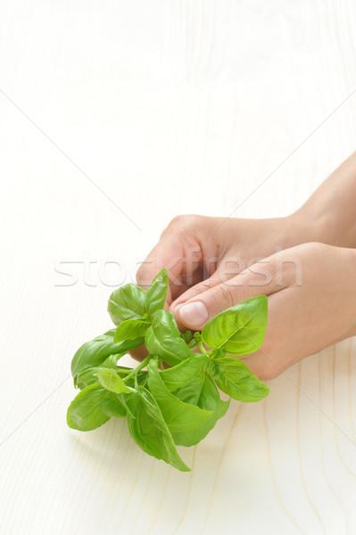 Zdjęcia stock: Bazylia · ręce · młoda · kobieta · świeże · zioła