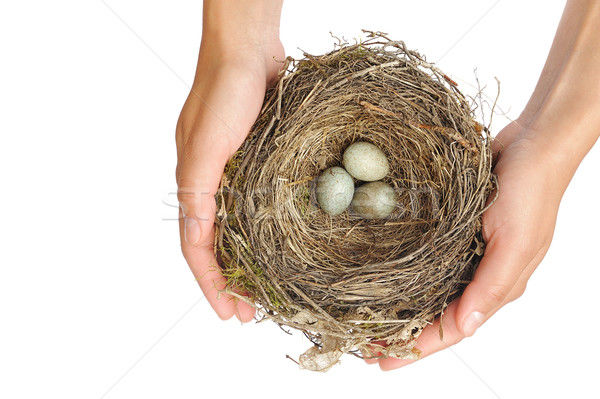 Young woman holding blackbird nest over white background Stock photo © brozova