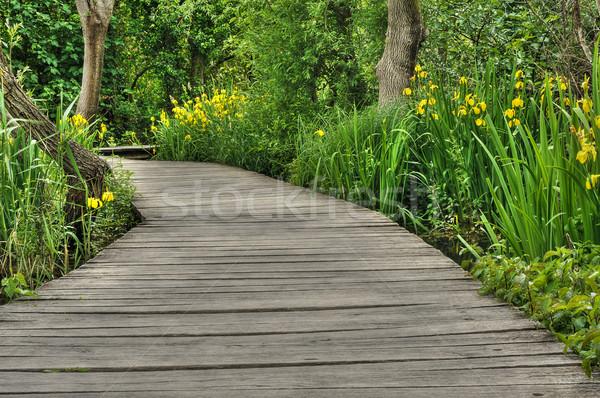 пешеходный мост парка Хорватия цветок дерево весны Сток-фото © brozova