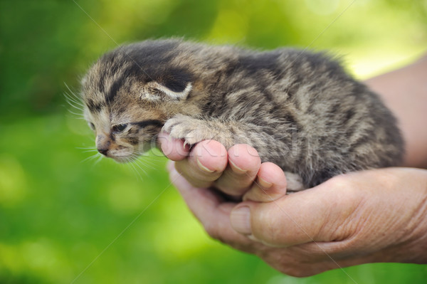 Senior vrouw handen hand baby natuur Stockfoto © brozova