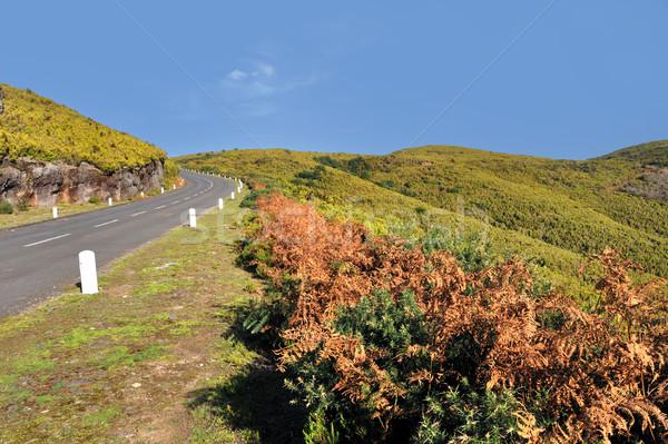дороги плато природного мадера острове Португалия Сток-фото © brozova