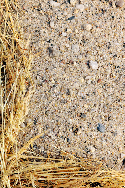 Detail of dry grass hay and sand - frame Stock photo © brozova