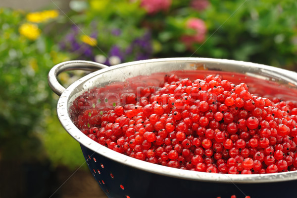 Fresh red currant berries with water drops in colander Stock photo © brozova