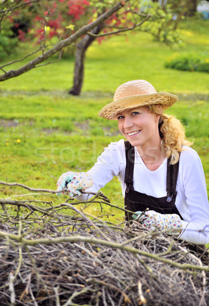 Fiatal nő dolgozik gyümölcsös fa köteg vág Stock fotó © brozova