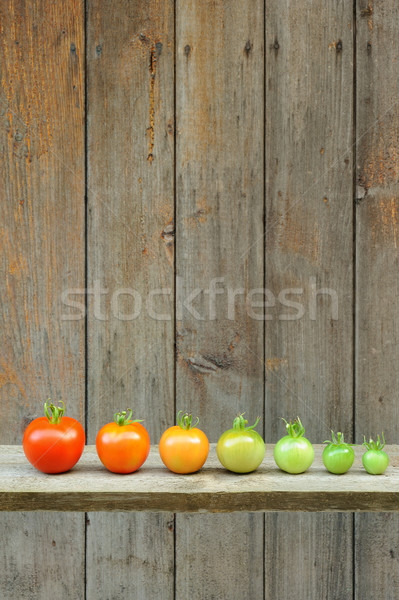 Evolution of red tomato - maturing process of the fruit – stages of development Stock photo © brozova