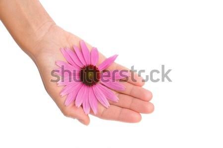 Mano fiore donna mani Foto d'archivio © brozova