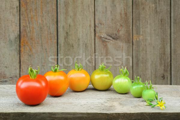 Evolução vermelho tomates processo fruto desenvolvimento Foto stock © brozova
