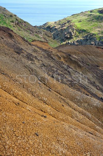 Sahil madeira ada su çim doğa Stok fotoğraf © brozova
