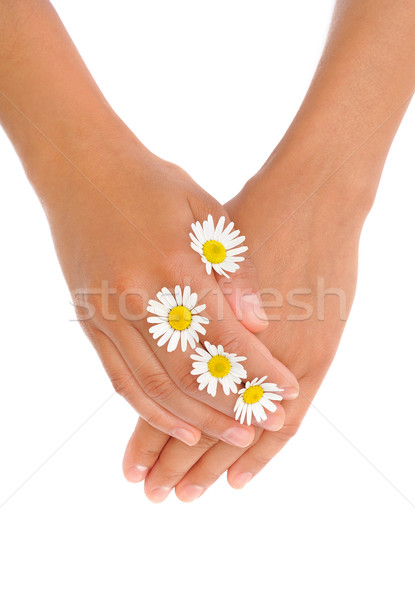 Hands of young woman with chamomile flower heads Stock photo © brozova