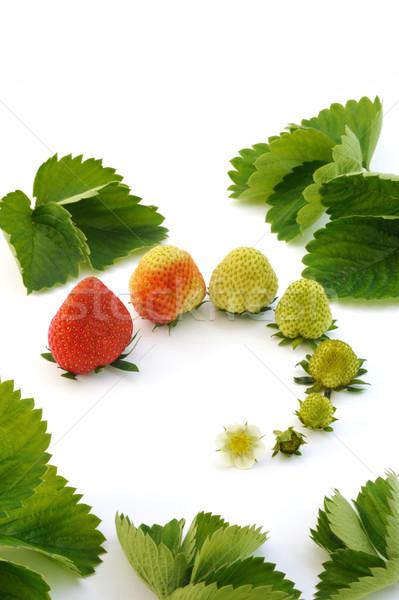 Strawberry growth isolated on white Stock photo © brozova