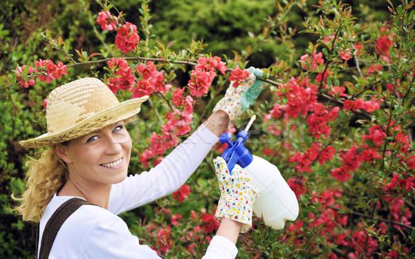 Young woman spraying tree Stock photo © brozova