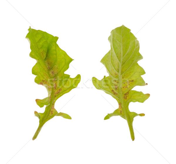 Diseased leaf of  Gerbera Daisy  – fungal attacked Stock photo © brozova