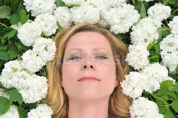 Young woman laying in flowers - snowballs Stock photo © brozova
