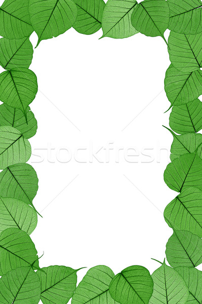 Skeletal leaves on white background - frame .Clipping path included. Stock photo © brozova