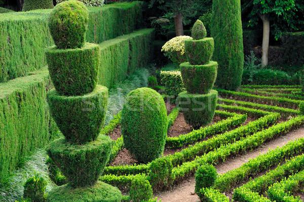 Decorative green park  Stock photo © brozova