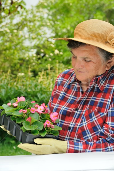 Senior woman - gardening Stock photo © brozova