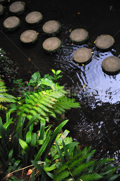 Japanese garden Stock photo © brozova