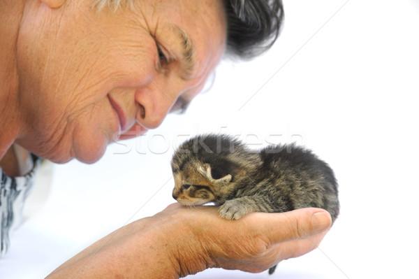 Foto stock: Senior · mulher · gatinho · mão · bebê