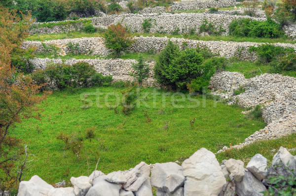 Sheep pasture, drystone walls, Rudine, Krk island, Croatia Stock photo © brozova