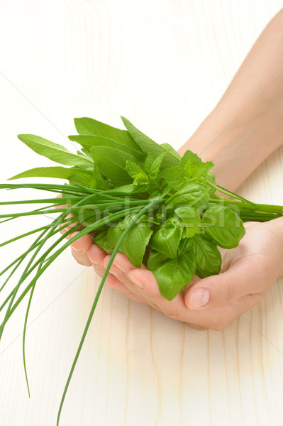 Hands of young woman holding fresh herbs, basil, chive, sage Stock photo © brozova