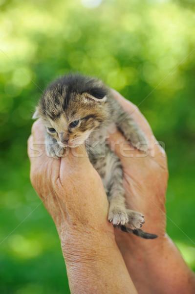 старший женщину рук стороны ребенка природы Сток-фото © brozova