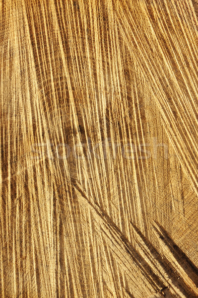 Detail of wooden cut texture - rings and saw cuts - oak - background Stock photo © brozova