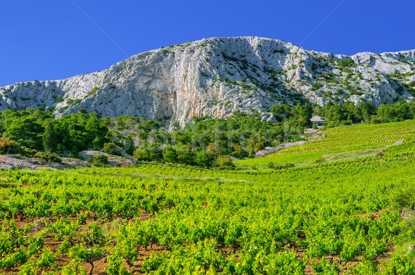 Zuidelijk kust Kroatië eiland west hemel Stockfoto © brozova