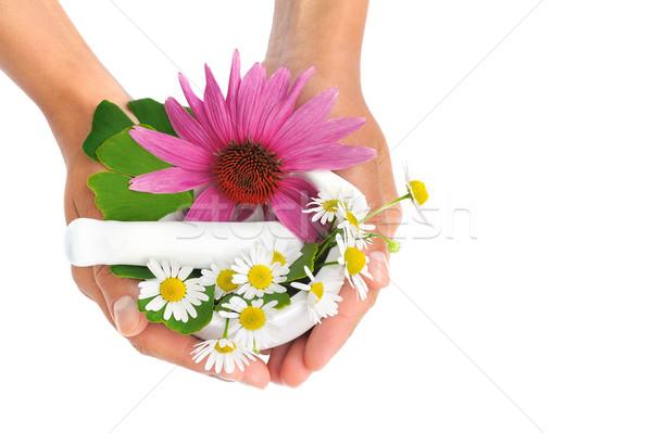 Zdjęcia stock: Młoda · kobieta · zioła · rumianek · kobieta · kwiat