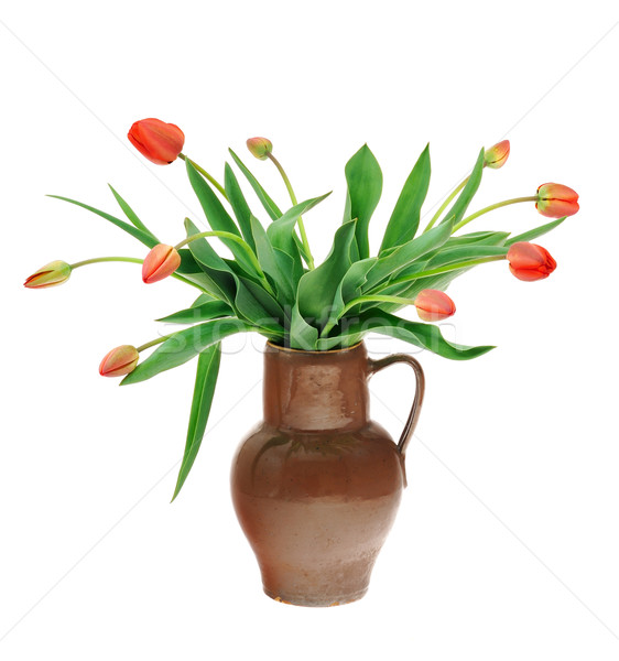 Red tulips in old fashioned jug isolated on white background Stock photo © brozova