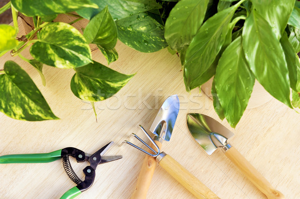 Gardening tools and houseplants  Stock photo © brozova