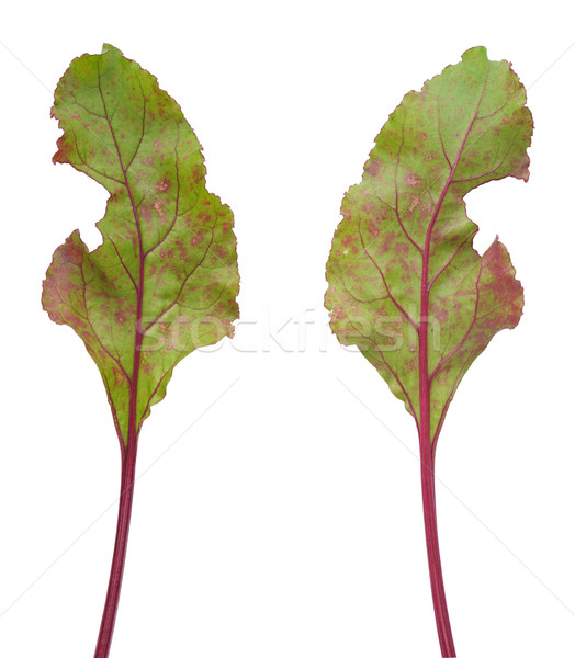 Infection of beetroot leaf by Cercospora beticola Stock photo © brozova