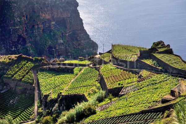Dél part Madeira sziget Portugália égbolt Stock fotó © brozova