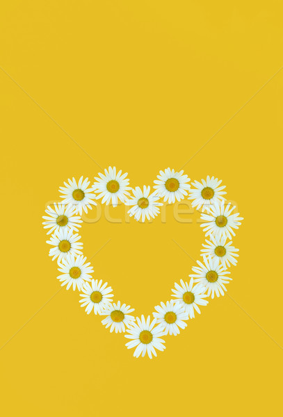 Daisy in love shape over yellow background Stock photo © brozova