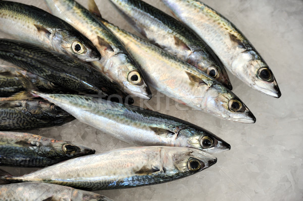 Fresh mackeler fish, market of Madeira, Portugal Stock photo © brozova