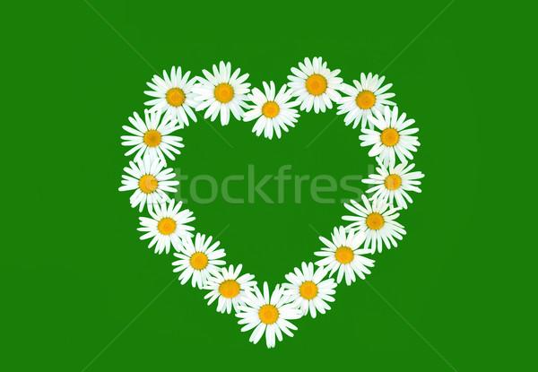 Daisy in love shape over green background Stock photo © brozova