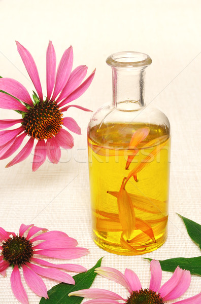 Coneflower essential  oil in bottle - stillife Stock photo © brozova