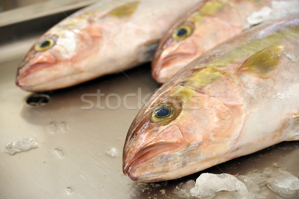 Fresh Red Snapper, market of Madeira, Portugal Stock photo © brozova