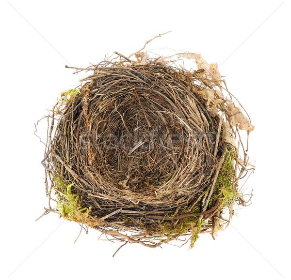 詳細 クロウタドリ 巣 孤立した 白 木材 ストックフォト © brozova